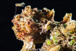 Angler Fish at Bunaken Island by Mathias Weck