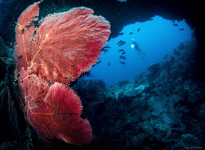 A diver explores the the pristine reefs around Papua New ... by Tony Cherbas