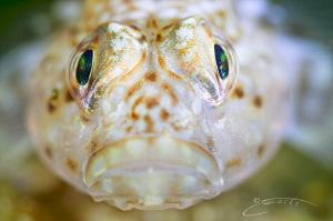 ~ Eye Contact ~ by Geo Cloete