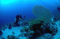 Divers and fancoral 10.5mm nikkor natural light by Chris Kennedy