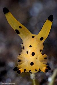 Nudibranch Pokemon by Iyad Suleyman