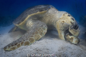 """Crunch and Munch""