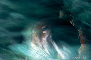 slow shutter speed with snoot light on the octopus by Raffaele Livornese