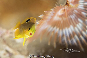 i spent long time wait it swam into my final composition ... by Tianhong Wang
