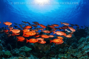 Red Fish by Stuart Ganz