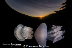 Together. by Francesco Pacienza