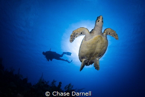 """""""Enlightening Experiences"""" Magical moments experiencing ... by Chase Darnell"""