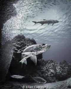Memories Hunter & prey at Devil's Grotto some weeks ago... by Ellen Cuylaerts