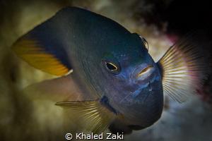 Red Sea Beauty by Khaled Zaki