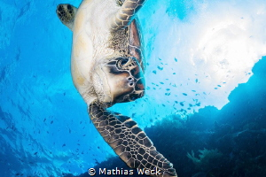 Sea turtle near Bunaken Island by Mathias Weck