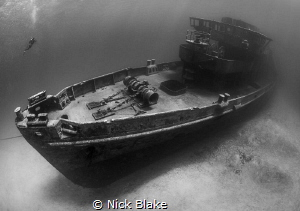 Kittiwake and diver