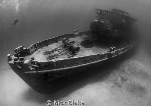 Kittiwake and diver Grand Cayman by Nick Blake