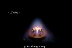 HELPLESS by Tianhong Wang