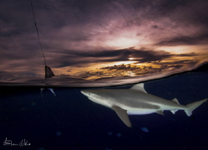 Baiting Blacktips.. fishing for photos. by Steven Miller