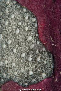 Reef texture on the pier wood. by Mehmet Salih Bilal