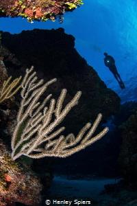 Cayman Reef Scene by Henley Spiers