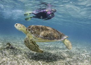 Interacting with marine life while snorkeling. by Glenn Ostle