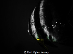 Flash in the darkness by Matt Kyle-Henney