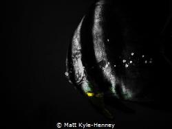 Flash in the darkness by Matt Kyle-Henney