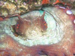 Octobus by Hakan Taslicay