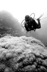 Black... White... Red Sea! by Erich Reboucas