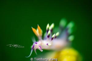 BLOSSOM by Tianhong Wang