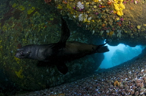 ~ Trust ~