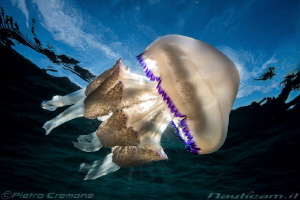 Sunny jellyfish by Pietro Cremone