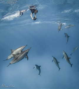 Surface Dive. 2 images taken seconds apart, and a composi... by Steven Miller