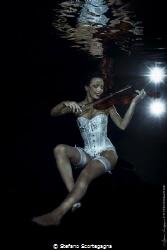 Master fiddler by Stefano Scortegagna