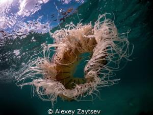 Jellyfish - zero by Alexey Zaytsev