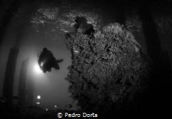 Wreck in Blue Heron Bridge by Pedro Dorta
