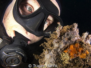 My dive buddy trying to look as cute as the Nudibranch:) by Tracey Harris