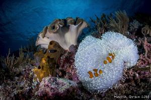 Reefscape from Maluku, Indonesia by Henrik Gram Rasmussen