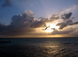 This was taken at Isla Mujeres. Every evening the pelican... by Bonnie Conley