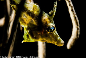 Slender file fish hiding in the coral and sponges. by Dusty Norman