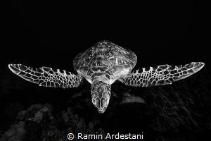 Release... by Ramin Ardestani