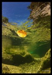 David BORG - Freshwater by David Borg