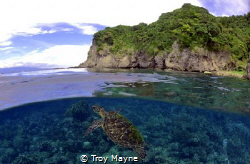 Green Turtle at Apo Island, Philippines. by Troy Mayne