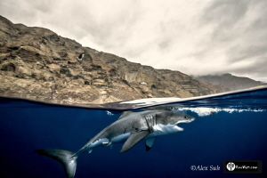 Over Under of Great White Shark by Alex Suh