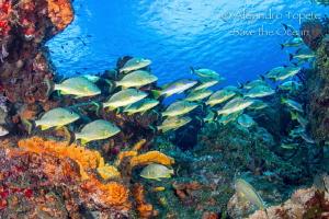 Paso del cedral Reef, Cozumel Mexico by Alejandro Topete
