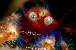 SHOCK EYES by Tianhong Wang