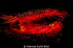 Disco clam. by Mehmet Salih Bilal