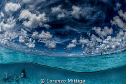 Overunder image. A great Barracuda entered the frame whil... by Lorenzo Mittiga
