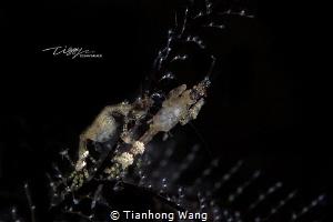 INFO EXCHANGE by Tianhong Wang