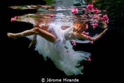 River flower by Jérome Mirande