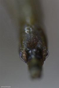 Pipefish by Iyad Suleyman