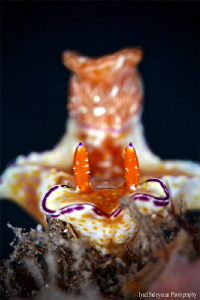 Nudibranch by Iyad Suleyman