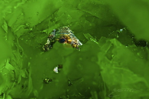 ~ Green Jewel ~ by Geo Cloete