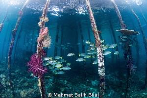Savandorek pier with fisheye. by Mehmet Salih Bilal